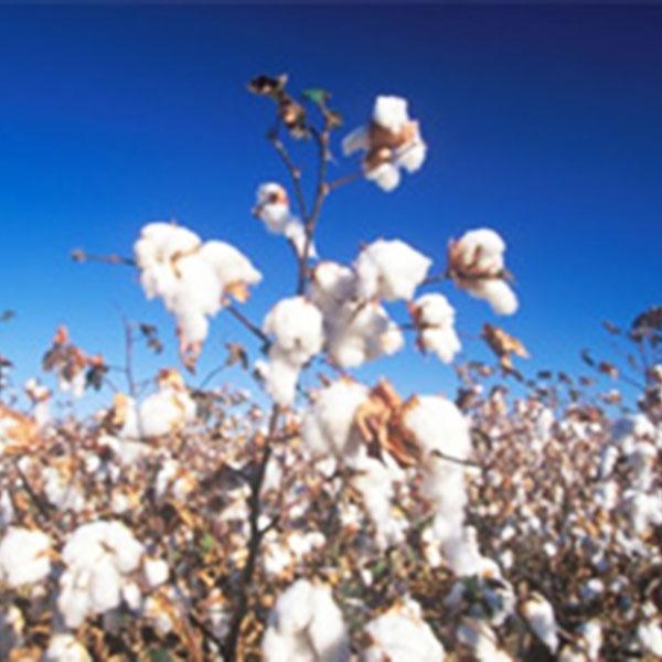 VIRI-DARI deserta ソリッドフェイスタオル(ホワイト)