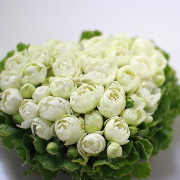 kusakanmuri(くさかんむり) Gateau de Rose(ガトー・ドゥ・ローズ) バラのケーキ